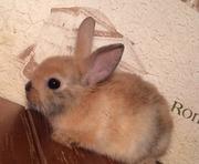 Питомник веселый хвостик. Декоративные кролики